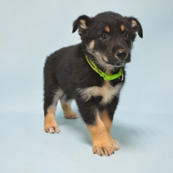 Шерлок - Собаки в добрые руки