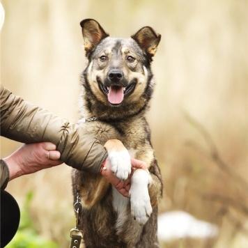 Ромка - Собаки в добрые руки