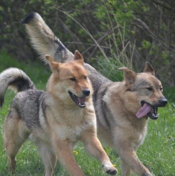 Братья - Собаки в добрые руки