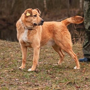 Ворош - добрый великан - Собаки в добрые руки