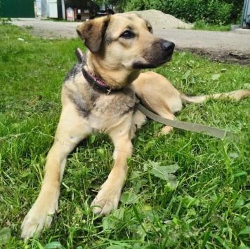 Лапочка Шелли - Собаки в добрые руки