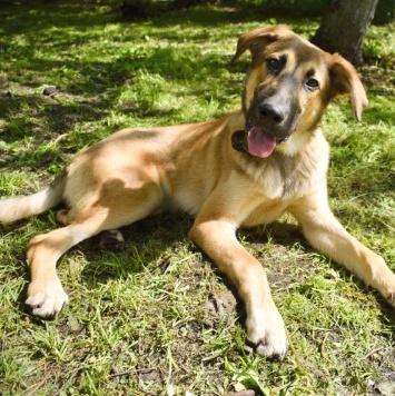 Шегги - Собаки в добрые руки