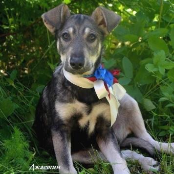 Джастин - Собаки в добрые руки