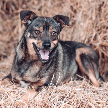 Дженни - Собаки в добрые руки