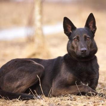 Мамба - Собаки в добрые руки