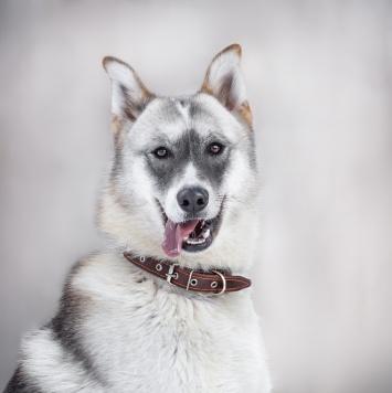 Кристофер - Собаки в добрые руки