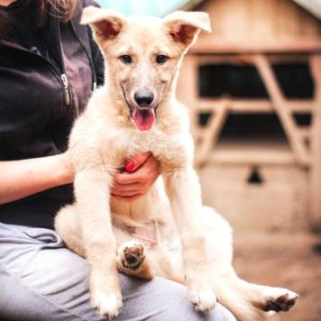 Шустрик - Собаки в добрые руки