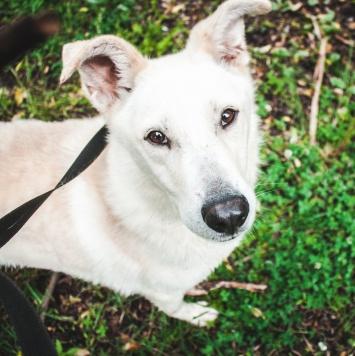 Велес - Собаки в добрые руки