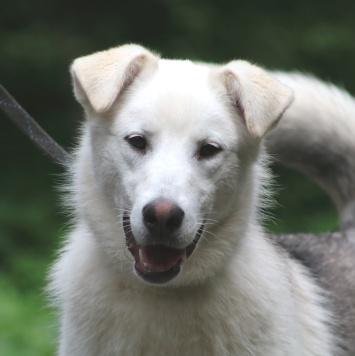 Айсберг - Собаки в добрые руки