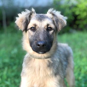 Жулька - Собаки в добрые руки