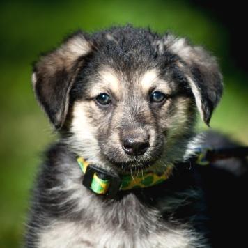 Чардаш - Собаки в добрые руки