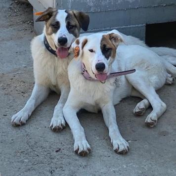Две собаки - Собаки в добрые руки