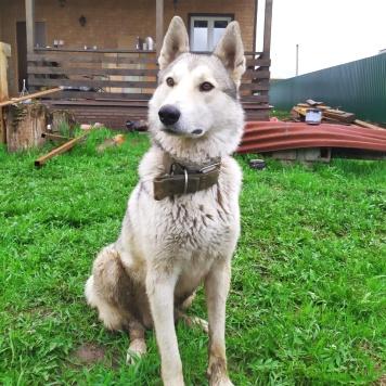 Салар - Собаки в добрые руки