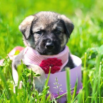 Красавица Софи - Собаки в добрые руки