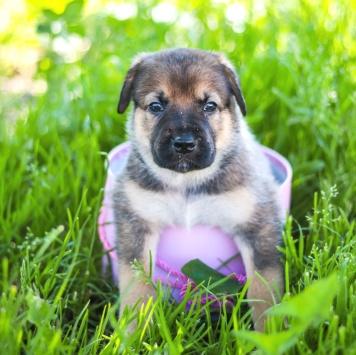 Симпатяжка Джули - Собаки в добрые руки