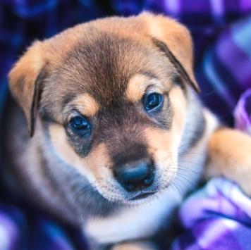 Умопомрачительный Майло - Собаки в добрые руки