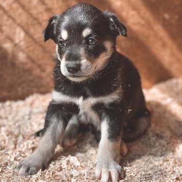 Грейс - Собаки в добрые руки