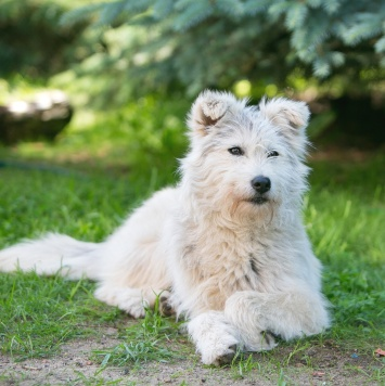Лавина - Собаки в добрые руки