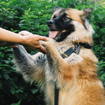Халва - Собаки в добрые руки