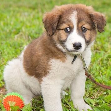 Брита - Собаки в добрые руки