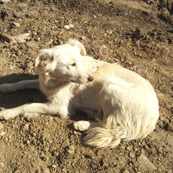 Белка - Собаки в добрые руки
