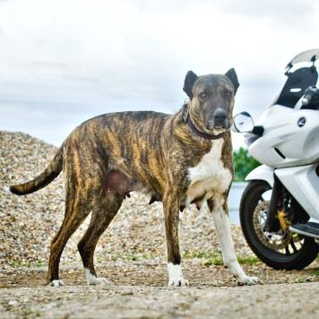 Сати - Собаки в добрые руки