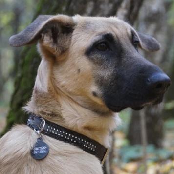 Тобиас - Собаки в добрые руки