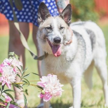 Хани - Найденные собаки