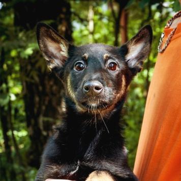 Малыш из приюта - Собаки в добрые руки