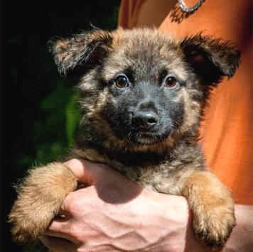 Малыш пушистый комочек - Собаки в добрые руки