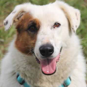 Ромашка - Собаки в добрые руки
