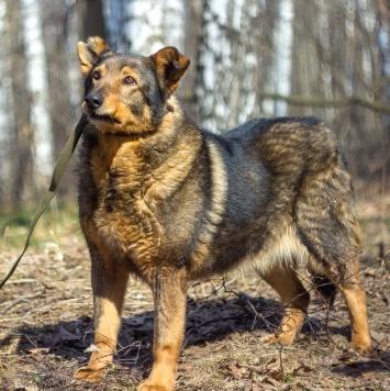 Хилари - Собаки в добрые руки