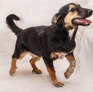 Липка - Собаки в добрые руки