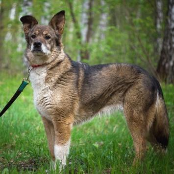 Ронда - Собаки в добрые руки