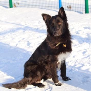 Шади - Собаки в добрые руки