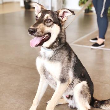 Майбах - Собаки в добрые руки