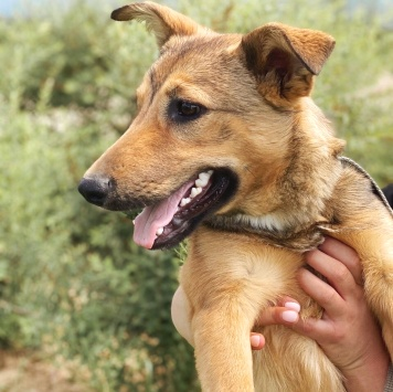 Нита - Собаки в добрые руки