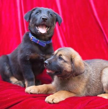 Мальвина и Бакс - Собаки в добрые руки
