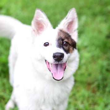 Барри - Собаки в добрые руки