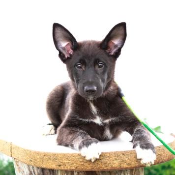 Алтея - Собаки в добрые руки