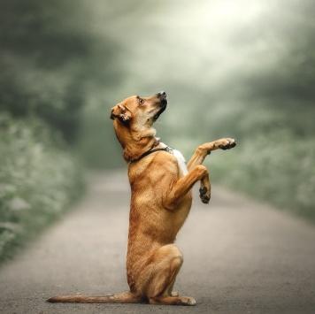 Микки - Собаки в добрые руки