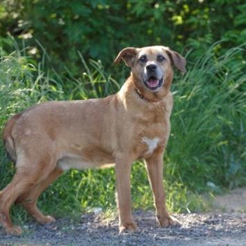 Афоня - Собаки в добрые руки