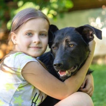 Янчик - Собаки в добрые руки