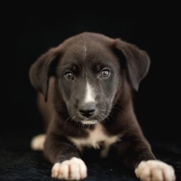 Стивен - Собаки в добрые руки