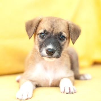 Муся - Собаки в добрые руки