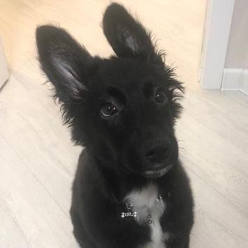 Габи - Собаки в добрые руки