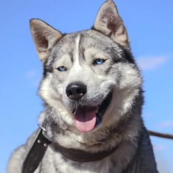 Хасан - Собаки в добрые руки