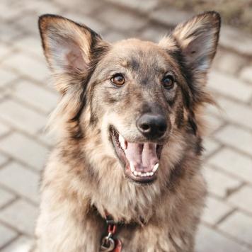 Маниша - Собаки в добрые руки