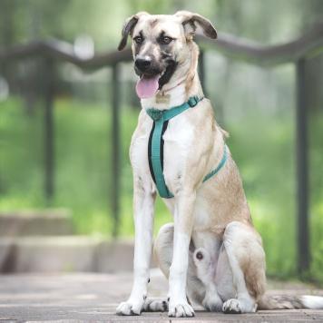 Бали - Собаки в добрые руки