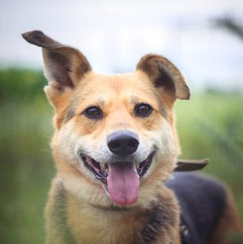 Трейси - Собаки в добрые руки